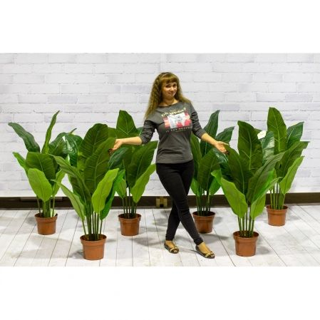 П120/43(з.) Банановая пальма (латекс) h120см