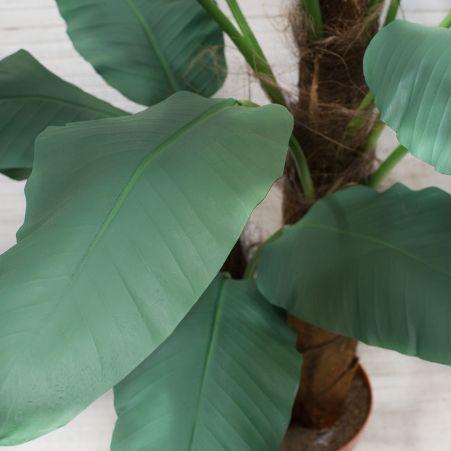 П170/2С/43-1(з.) Банановая пальма (премиум) 170см
