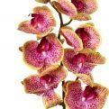401/0012-28L Орхидея искусственная латекс h-99см пурпурная (8г+5б)