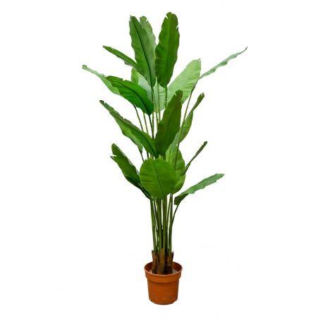 П180/356 Куст Банана (зеленый)h180см(латекс)
