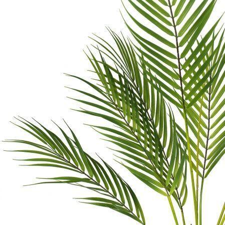 7143/0117-90 Пальма Арека кустовая (13 листов) h=95см (70+25)
