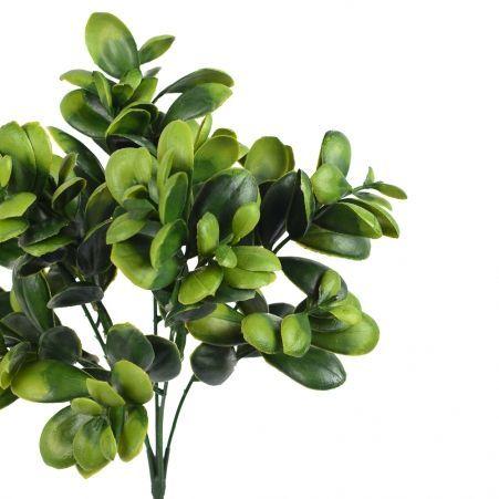 7143/0381-11 Толстянка зелёная*5 h=29см (20+9)