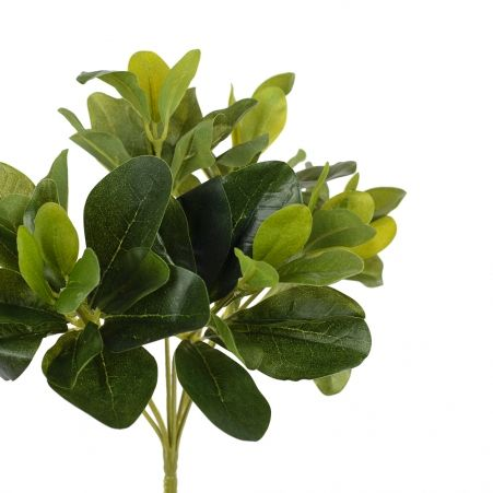 7143/0411-9 куст Питтоспорума зеленый (латекс) h=22см (15+7)
