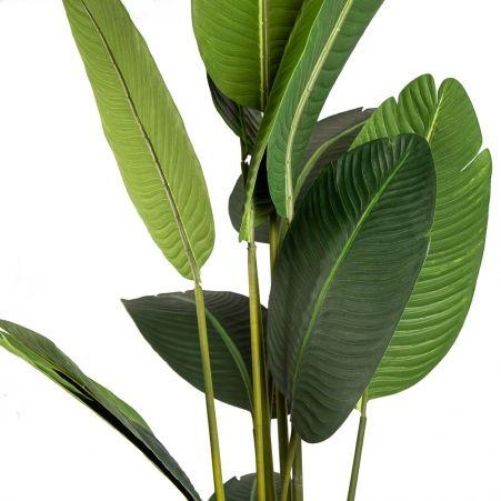 180/К/360(Х)(Promo) Банановая Пальма h180см