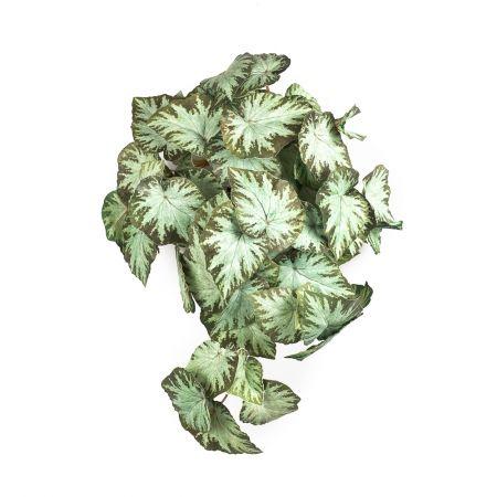 КС72 Бегония ампельная зеленая в кашпо