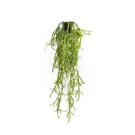 КС87 Рипсалис зеленый ампельный в кашпо