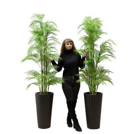 ПК160/5С/359 Пальма кустовая h160см