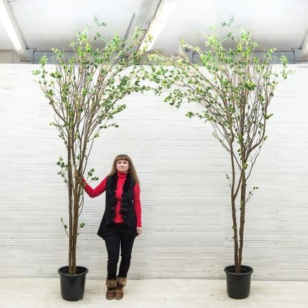300/РН/172(з.) Дерево интерьерн.с распускающ.листочками h-300см (левое)