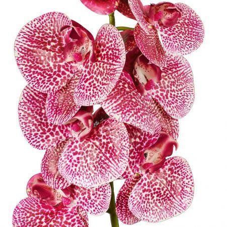 401/0347-15 Орхидея латекс с прожилками h97см малинов.(9г;4б)