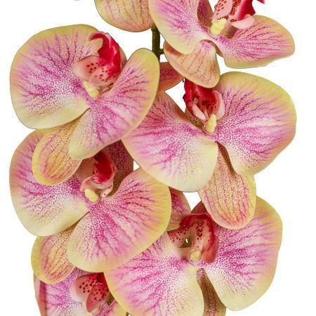 401/0347-20 Орхидея латекс с прожилками h97см желт-розов.(9г;4б)
