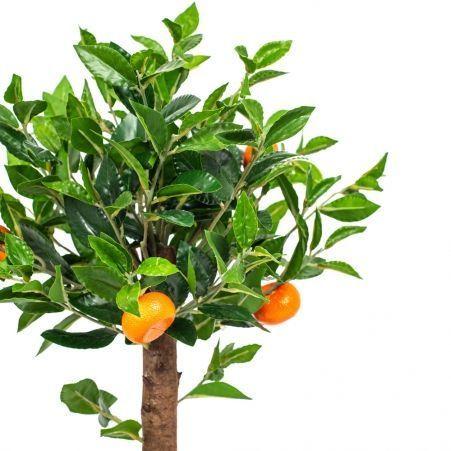 50/24М(з.) Мандарин с плодами латекс на кругл.основании