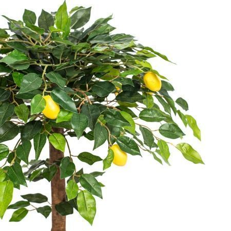 "БП50/41(з.) Бонсай плодовый ""Лимон-мини"" на кругл.основании"