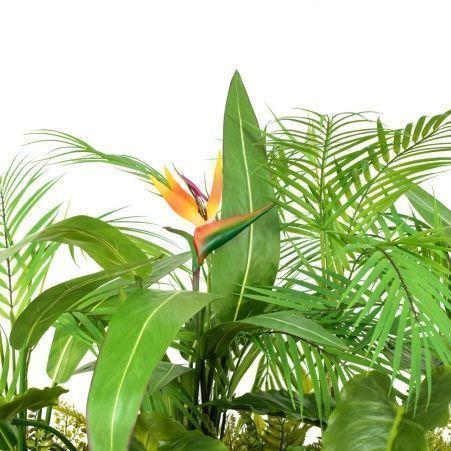 К327/1 Тропический микс со стрелицией h67см в кокосовом боксе 80*20*h10