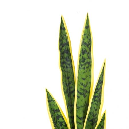 7143/0382-1/3 Сансевиерия (щучий хвост) больш. (желт.)h 68 см