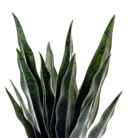 ЦС94-1 Сансевиерия малая в горшке d 11(h-50 см)