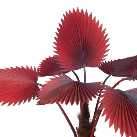 П120/358-3 Пальма веерная h120см(латекс)(бордовая)