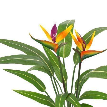 К60*3-1 Стрелиция куст (латекс) с цветами малый в кашпо d-15;h-60см