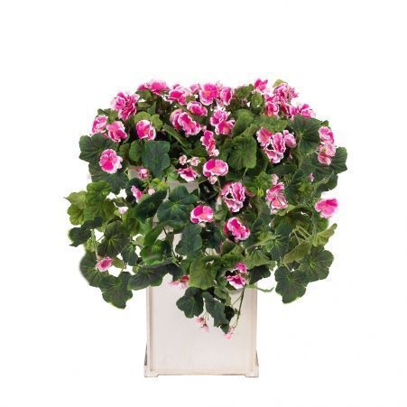 Ц0031-1 Франц.балк.40см Пеларгония ампельн.розовая (55хh50см)