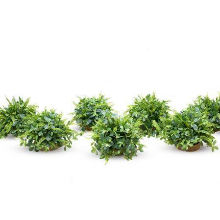 Композиция цветочная зелень в кокосовом круглом боксе(з) d25. h-6см(бокса)