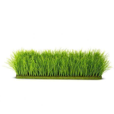 ТД058-15/1(з) Трава Осока h 20см на основании (84*17*3)