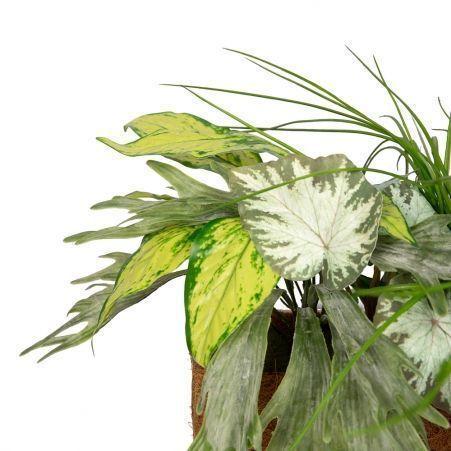 К338 Зеленый микс с ампельными растениями h30-35см(латекс) в кокосовом боксе 50*20*10