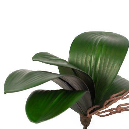 7143/09569 Лист орхидеи с корнями h26см (Ф)
