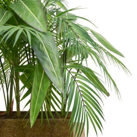 К342(з.) Композиция с пальмой Арека h70-75см(латекс) в кокосовом боксе 88*8*8