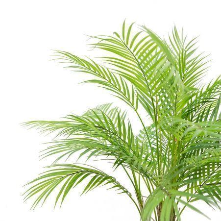 П80/К/359(з.) Пальма кустовая h80см
