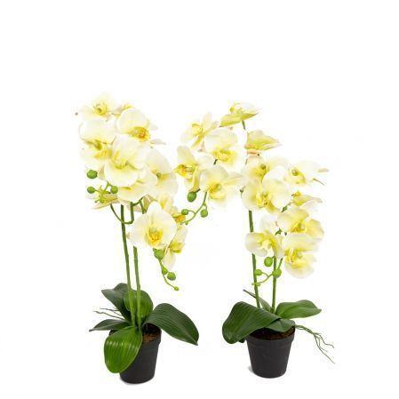 ЦИ60*2/33-1(з.) Орхидея h60см(латекс) в техническом горшке d11см