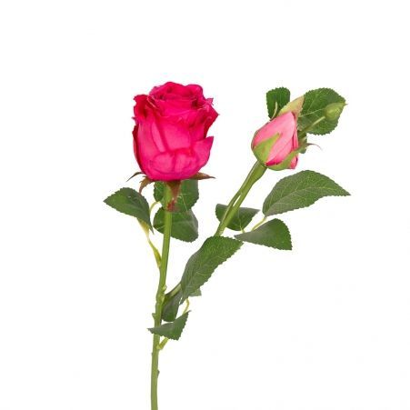 7141/9182-3/7Р Роза ветка 55-60см (цикламен)(1голова+1бутон)