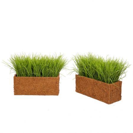 ТД058-20(з.) Трава Осока h18-20см в кокосовом боксе (36*14*h15см)