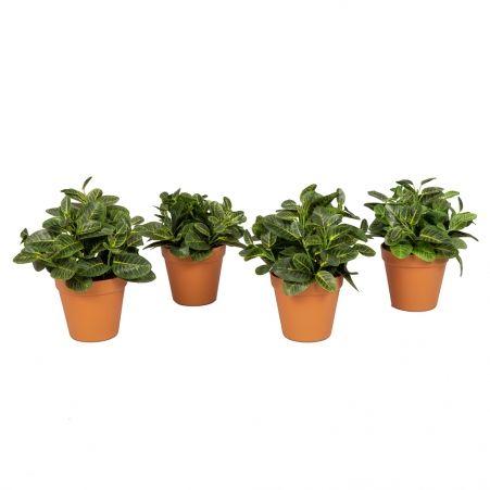 КС65(Д)(Sale) Растение искусственное Бересклет в кашпо h-26см