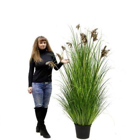 ЦС117 Трава Осока широкая раскидистая с камышом h200см в кашпо d28см