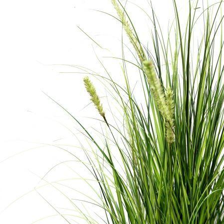 ЦС117-1 Трава Осока широкая раскидистая с колосьями h200см в кашпо d28см