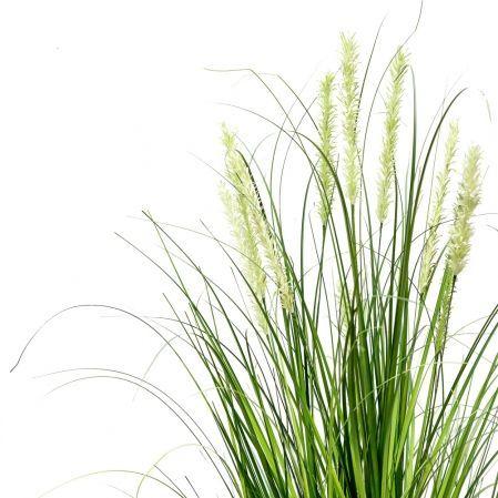 ЦС118-1 Трава Осока широкая раскидистая с колосьями h150см в кашпо d19см