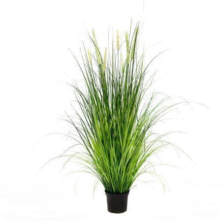 ЦС119-1 Трава Осока широкая раскидистая с колосьями h115см в кашпо d15см
