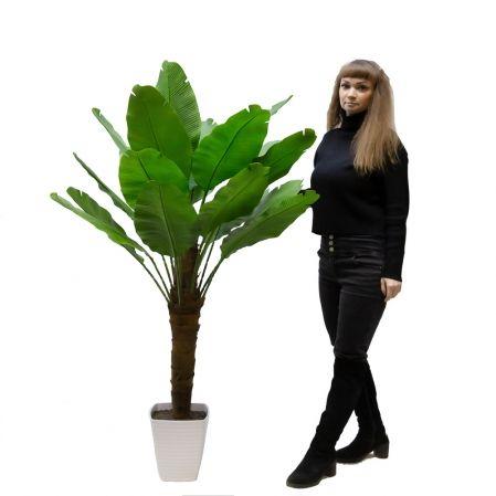 П160/356-2/1(з) Банановая пальма(зеленая) h160см(латекс) в интерьерном кашпо