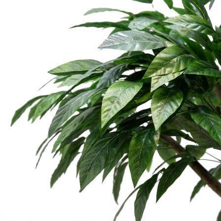 240/РН/200(з.) Дерево манго без плодов h240см