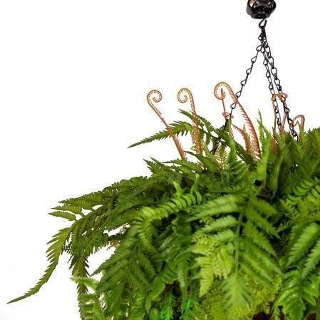 ККВ03-2(з.) Папоротники в подвесной декоративной коковите d30см с ампельными растениями