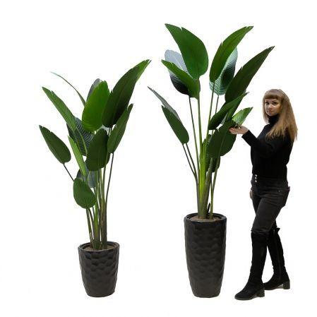 180/К/360(Promo) Банановая Пальма h180см