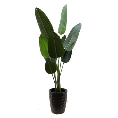 160/К/360(Promo) Банановая Пальма h160см