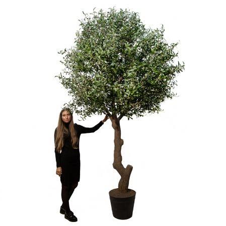 300разб/410(Promo) Оливковое дерево Премиум разборное h300см