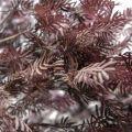 280разб/365-1(з.)(Promo) Дерево интерьерное h280(латекс)(лиловое)