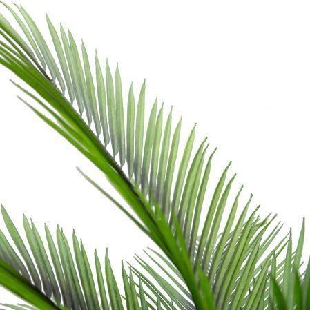 П180/К/49(Х)(Promo) Пальма кустовая h180см