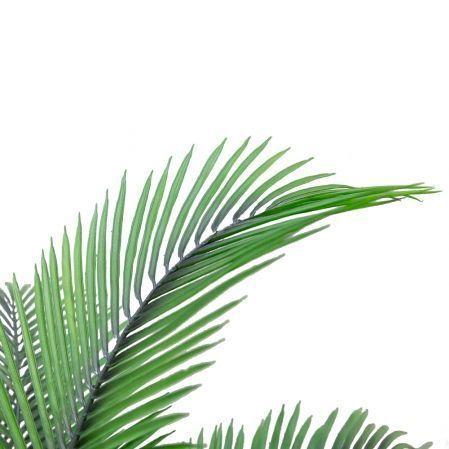 П130/К/49(Х)(з.)Пальма кустовая h130см