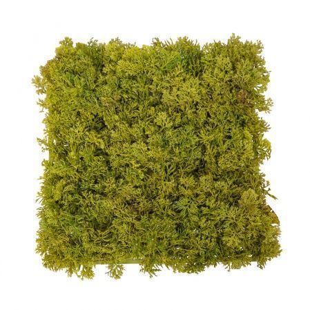 К7143/А2780-04 Коврик мох ягель зеленый микс с коричнев.25*25см