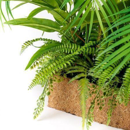 К367 Тропический микс с сарраценией(латекс) в кокосовом боксе 50*20*h10