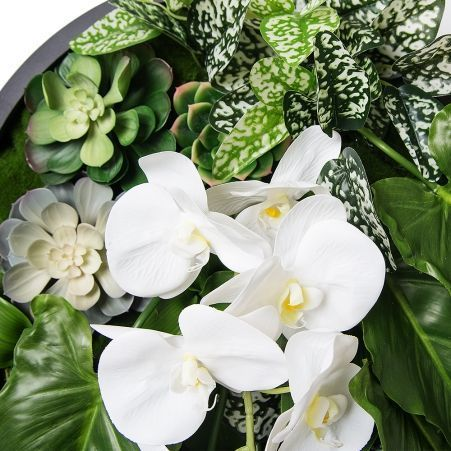 Фитопанно 04-2(з.) с орхидеей d55см
