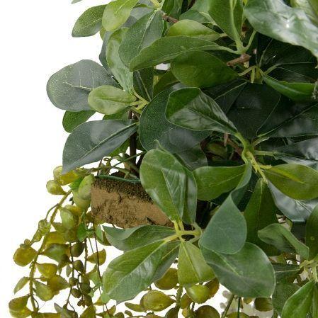 К310/6(з.) Шеффлера с ампельными растениями на основании 30х8х3