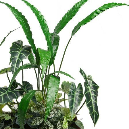 К376-1 Зелень микс с Алоказией и Калатеей в кокосовом боксе 50*20*h10